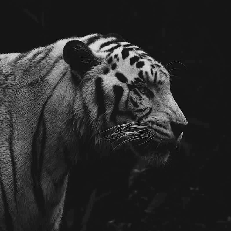FILM NIGHT: THE WHITE TIGER